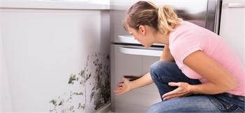 Guaranteed Mold Removal Services in Colorado Springs