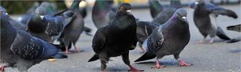 Get The Best Nuisance Bird Control in Colorado Springs