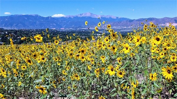 Late Summer in Colorado Springs