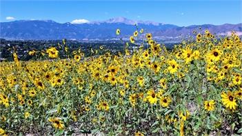 Late Summer in Colorado Springs